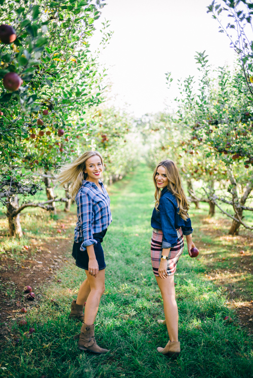 Picking Apples in an Apple Orchard