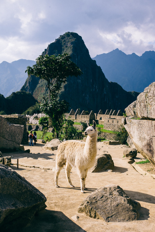 Machu Picchu Ancient City in Peru