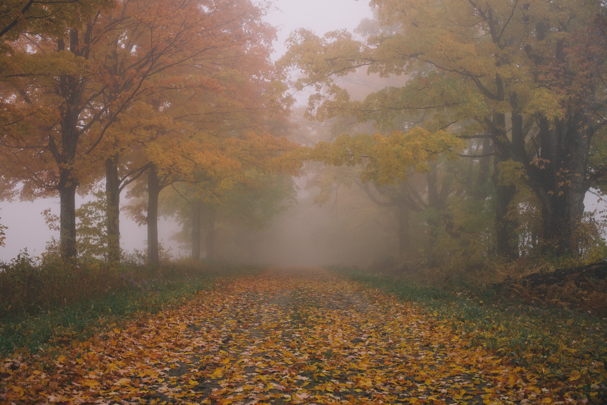 gmg-vermont-foggy-morning-1003396