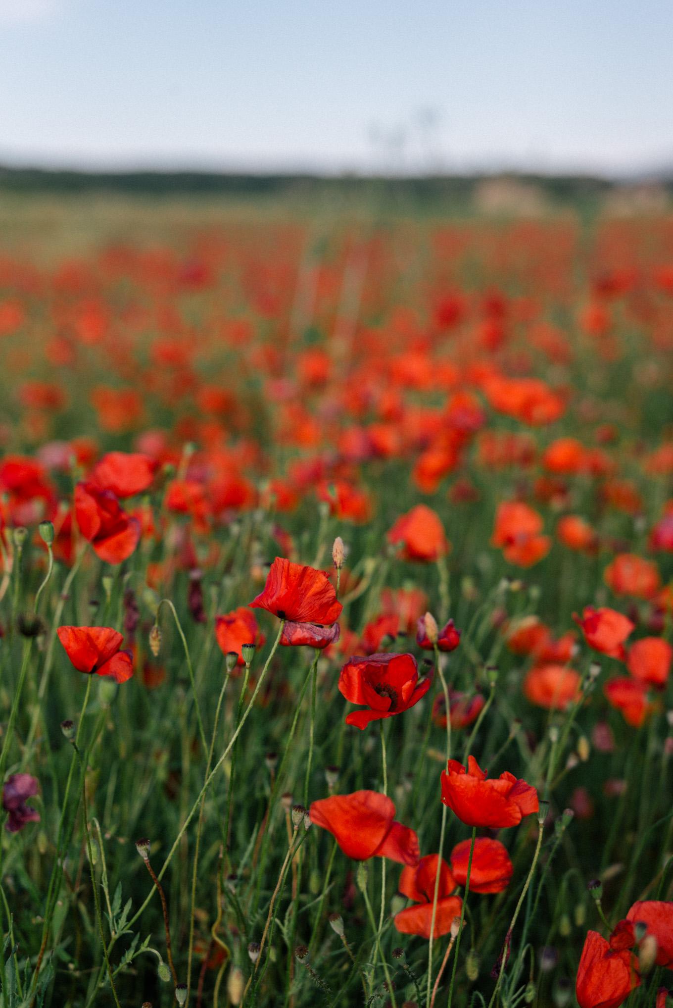 gmg-red-dress-poppy-fields-france-1008844