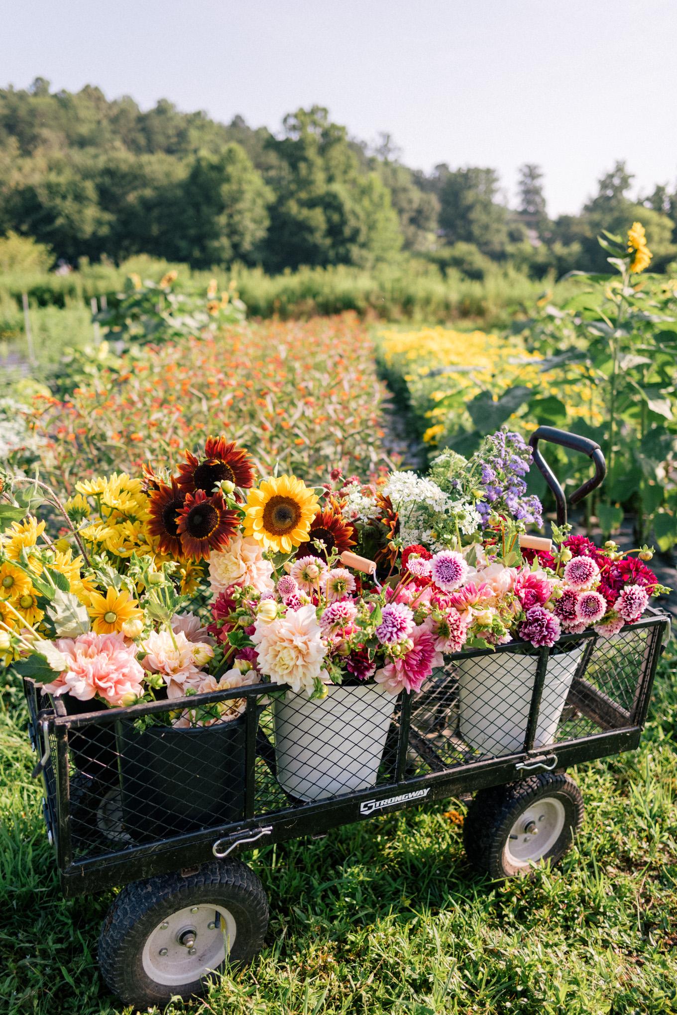 gmg-flourish-flower-farm-asheville-nc-1003349